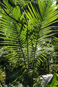tropical-palm-378057_640