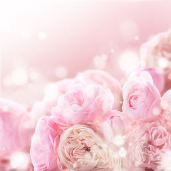 Pink roses bunch as a wedding background for design